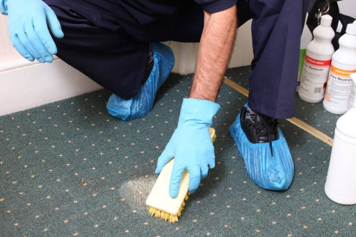 professional carpet cleaners Sydney